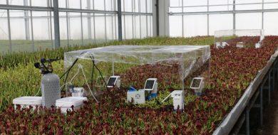 De perfecte oogst kweken in de kas met moderne sensoren.
